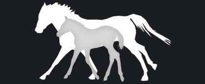 mare foal - Calphormin